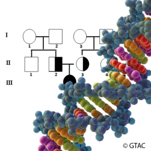 VCE402-main-image-Tree&DNA